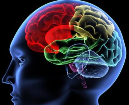 Inhalt des Artikels ist die Hirnveränderung im Alter.