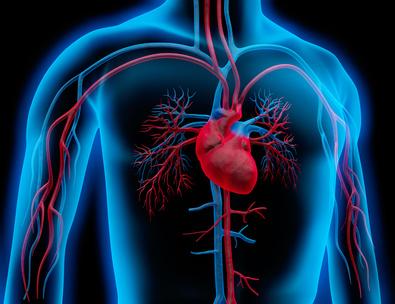 Inhalt des Artikels sind Herz-Kreislauf stärkende Kräuter und Pflanzen.