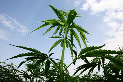 Überraschendes Urteil: Cannabis-Eigenanbau zu Therapiezwecken legal
